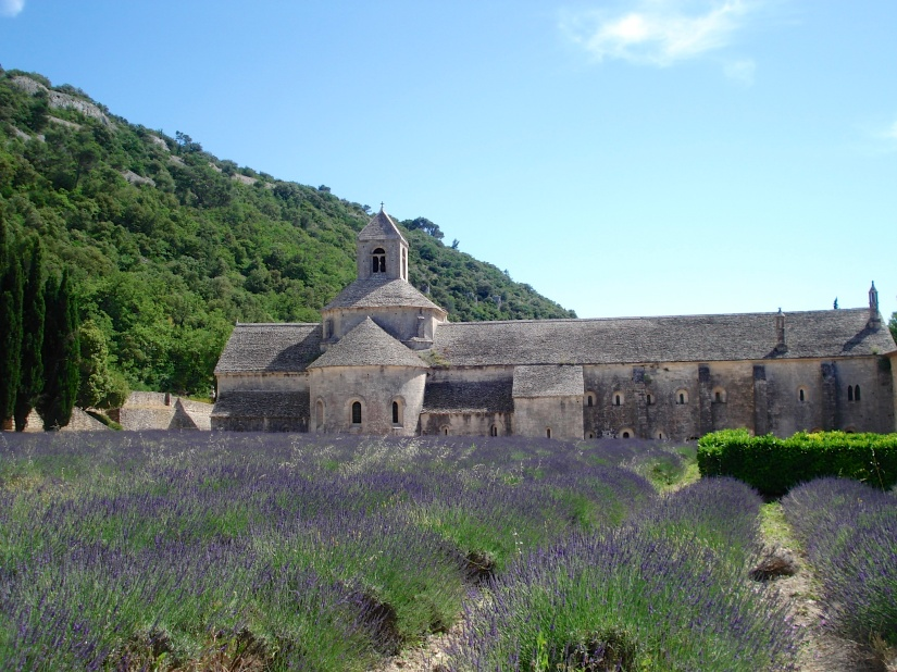 Field of lavender in Provence, summer of 2007