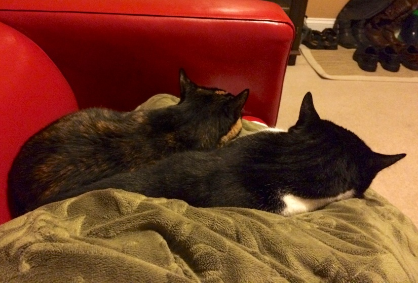 Kitties and I snuggled on the couch until 4am, hoping to get good news from the hubby.